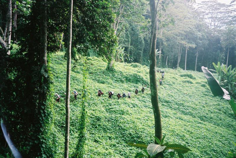 5.Aust, PNG to seek Kokoda heritage listing