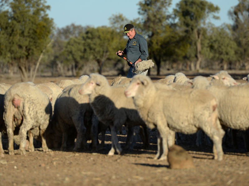 4.Aussie farmers to reap Dollar3.67b from TPP