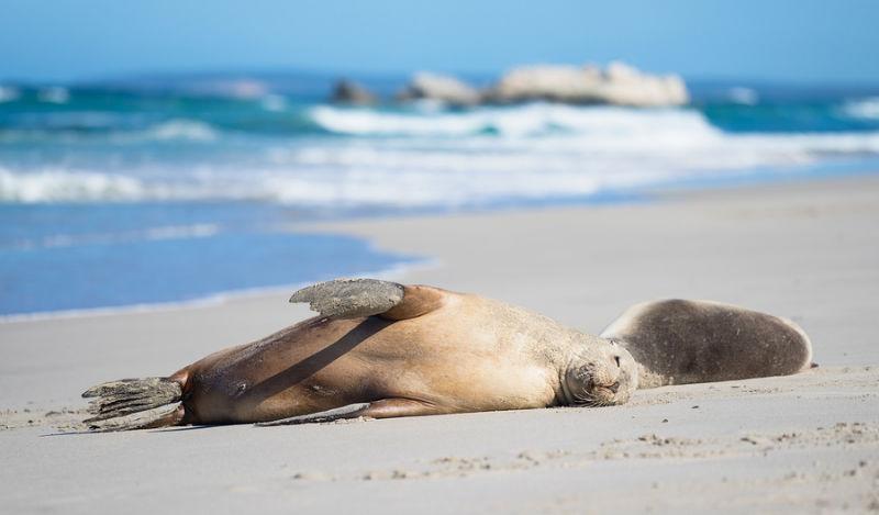 05_Dollar9m boost for Kangaroo Island tourism
