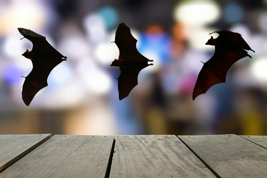 04_Bats disease immunity could help humans